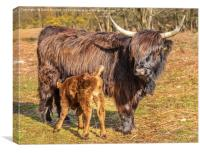 Highland Mother and Calf, Canvas Print