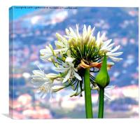 The Island of Flowers Madeira x2, Canvas Print