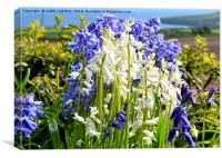 CONTRASTING BLUEBELLS, Canvas Print