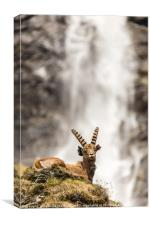 Sitting by a waterfall, Canvas Print