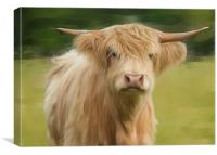 Oil And Chalk Painted Highland Cow, Canvas Print