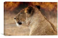 Lioness sitting by the fire, Canvas Print