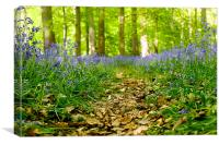 Bluebell path, Canvas Print