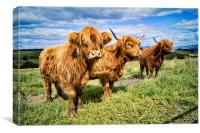 3 coo's, Canvas Print