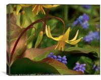 """TROUT LILY"", Canvas Print"