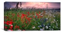 """SUN SETTING OVER THE POPPY FIELDS OF COUNTY DURHA, Canvas Print"