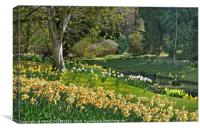 """""""Daffodils and Sunny days 2 """", Canvas Print"""