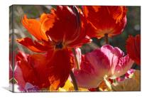 """Backlit Tulips blowing in the wind"", Canvas Print"