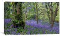 """""""Evening in a misty bluebell wood"""", Canvas Print"""