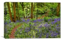 """Dappled sunshine in the bluebell woods"", Canvas Print"