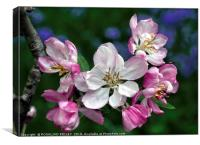 """""""Blossoms , Bluebells and bug"""", Canvas Print"""