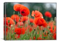 """Soft Poppies"", Canvas Print"