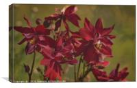 """Red Aquilegias"", Canvas Print"