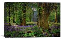 """Moonlit Bluebell woods"", Canvas Print"