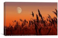 Moon over Reeds, Canvas Print