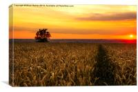 Sunset over the Wheat, Canvas Print