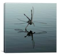 Flying reflecting fairy, Canvas Print