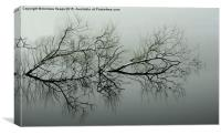 Reflection of tree., Canvas Print