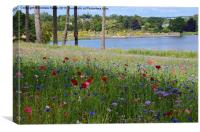 Flower meadow at Trentham Gardens, Canvas Print