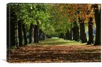 Colourful avenue of trees in autumn               , Canvas Print