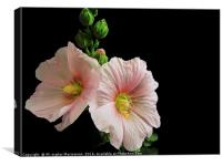 hollyhock , twins,, Canvas Print