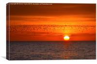 Migrating Sunset, Canvas Print