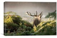 Roaring stag!, Canvas Print