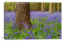 Forest Of Dean Bluebells, Canvas Print
