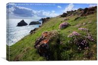 Thrift at Kynance Cove , Canvas Print