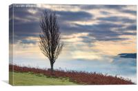 Tree above the Usk Valley, Canvas Print