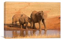 Elephant with calves, Canvas Print