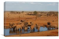 Elephants at waterhole in evening light, Canvas Print