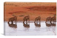 Warthog Reflections, Canvas Print