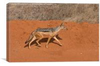 Black-Backed Jackal, Canvas Print