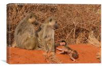 Yellow Baboon family, Canvas Print