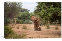 Bull Elephant threat posture, Canvas Print