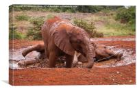 Baby Elephants playing in mud, Canvas Print