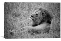 Resting Lion, Canvas Print