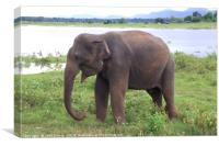 Elephant by the Lake, Canvas Print
