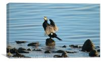 Cormorant at Low Tide, Canvas Print