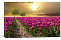 field of tulips , Canvas Print