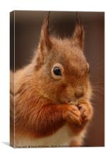 Red Squirrel V, Canvas Print