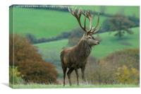 Impressive Red Stag, Canvas Print