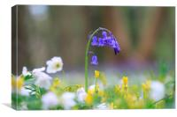 The Bluebell's world, Canvas Print