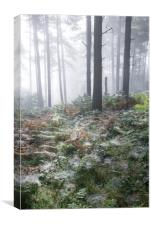 Dewy webs in the forest, Canvas Print