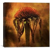 Last days of an Echinacea, Canvas Print