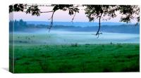 More Cows in the Mist , Canvas Print