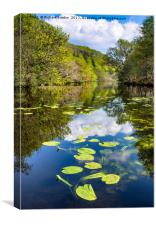 Lilly pads on the Loch, Canvas Print