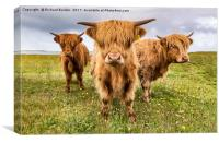 Highland Trio, Canvas Print
