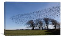 Starlings, Canvas Print
